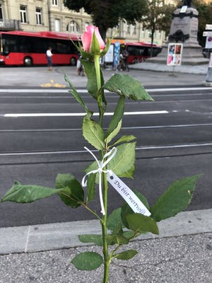 Rosen verschenken - Bern